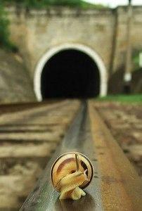 70 Railroad Snail